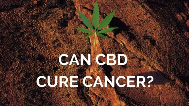CBD & Cancer Treatments: Can CBD Cure Cancer?